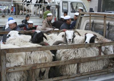 Guerbang_goats